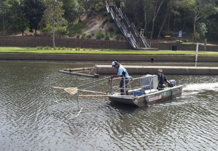 Sientists electrofishing in Parramatta River.