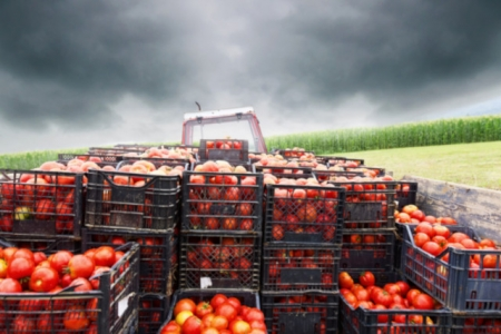 GLOBAL DEMAND FOR PREMIUM PRODUCE